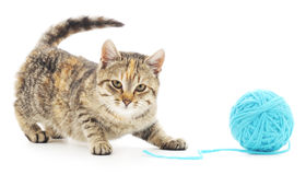 Cat with ball of yarn Stock Photography