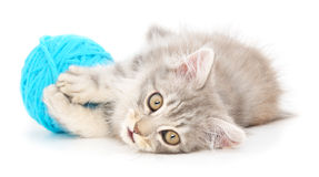 Cat with ball of yarn Royalty Free Stock Image