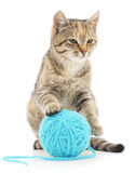 Cat with ball of yarn Stock Image