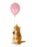Cat and balloon Royalty Free Stock Photo