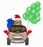 Cat with balloons in the car