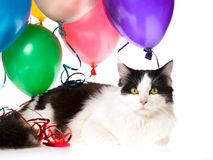 Cat with balloons and streamers on white Royalty Free Stock Photo