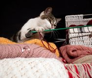 A cat between the balls Royalty Free Stock Image