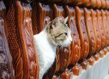 Cat In The Balusters Fotografia de Stock