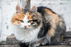 Cat on the banch Royalty Free Stock Image