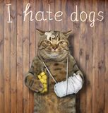 Cat with a bandaged paw near a fence. The cat with the bandaged paw and a broken head holds a bottle of yellow pills at the fence. I hate dogs. Wooden background stock photo