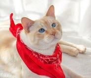 Cat in a bandana1 Stock Photos