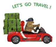 Cat travels by car 2 stock photography