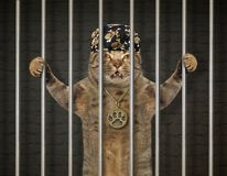 Cat bandit behind bars. The cat bandit in a bandana with a medallion is behind bars in the prison stock image