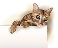 cat with banner. Watercolor style Royalty Free Stock Photos