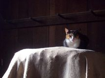 Cat in Barn Royalty Free Stock Photos