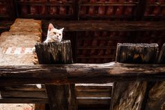 Cat in the barn royalty free stock photography