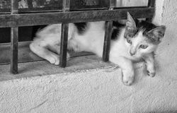 Cat and Bars Royalty Free Stock Images