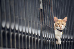 Cat between the bars. Cat watching stealthily between the bars Stock Photography