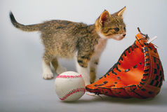 Cat and baseball Stock Photo