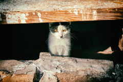 The cat. In the basement Stock Photo