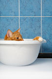 Cat in basin Stock Photos