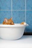 Cat in basin stock photos