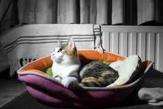 Cat in a basket 2 Stock Photography
