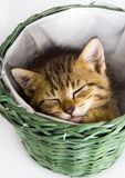Cat in the basket Royalty Free Stock Photos
