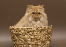 Cat in a basket. Dogs and cats in the most different situations and positions. Cat in a basket Stock Photography