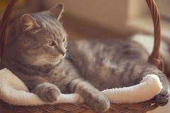 Cat basket Royalty Free Stock Image