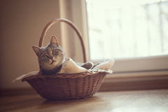 Cat in the basket Stock Photo