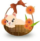 Cat in basket Stock Photos