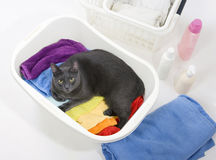Cat in basket with colorful laundry to wash. Cat in white plastic basket with colorful laundry to wash Royalty Free Stock Photography