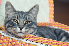 Cat in the basket Stock Images