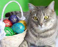 Cat with basket of Easter eggs. Gray tabby cat with a basket of colorful Easter eggs Royalty Free Stock Images