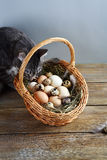 Cat and basket for easter Royalty Free Stock Photos