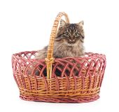 Cat in a basket. Cat in a basket on a white background Royalty Free Stock Photography