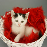 Cat in basket Stock Photos