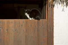 Cat basking on a barn door on a farm in Dutch Open Air Museum in Arnhem Royalty Free Stock Images