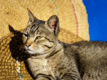 Cat basking in the sun Royalty Free Stock Photo