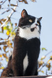 Cat basking in the sun  autumn day Stock Photography