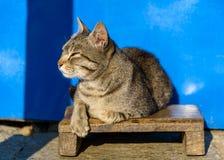 Cat basking in the sun Stock Photos