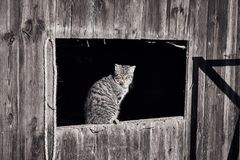 Cat basking in the sun. In a Window stock images