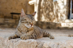 Cat basking in the sun in Greece Royalty Free Stock Images
