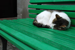 Cat. Basking in the sun. Green shop. Contry style Royalty Free Stock Photo