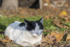 Cat basking in the sun. Cat lies on the grass and basks in the sun Stock Photography