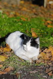 Cat basking in the sun. Cat lies on the grass and basks in the sun Stock Photos