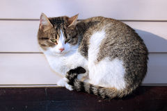 Cat basking in the sun Royalty Free Stock Photography