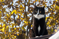 Cat basking in the sun warm  day Royalty Free Stock Photography