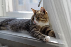 Cat basking in the sun Stock Photography