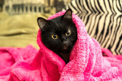 Cat basks under the towel Royalty Free Stock Image