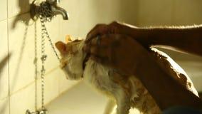 Cat Bath am Badezimmer stock video footage