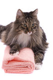 Cat with bath towel. The cat with bath towel. Pussy cat is lying on the peach-coloured towel. Isolated on a white background Stock Image
