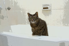 Cat in bathtub. Cartoon abstract of a cat with green eyes in a white bathtub royalty free stock image